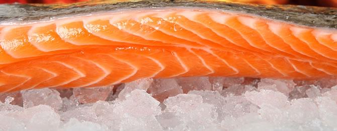 Salmon-670